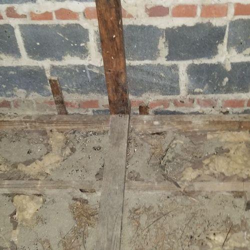 Bat Feces- After Removal