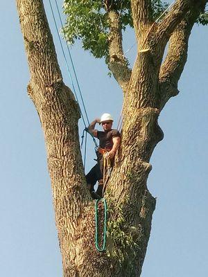 Avatar for CJS Tree Service Erlanger, KY Thumbtack