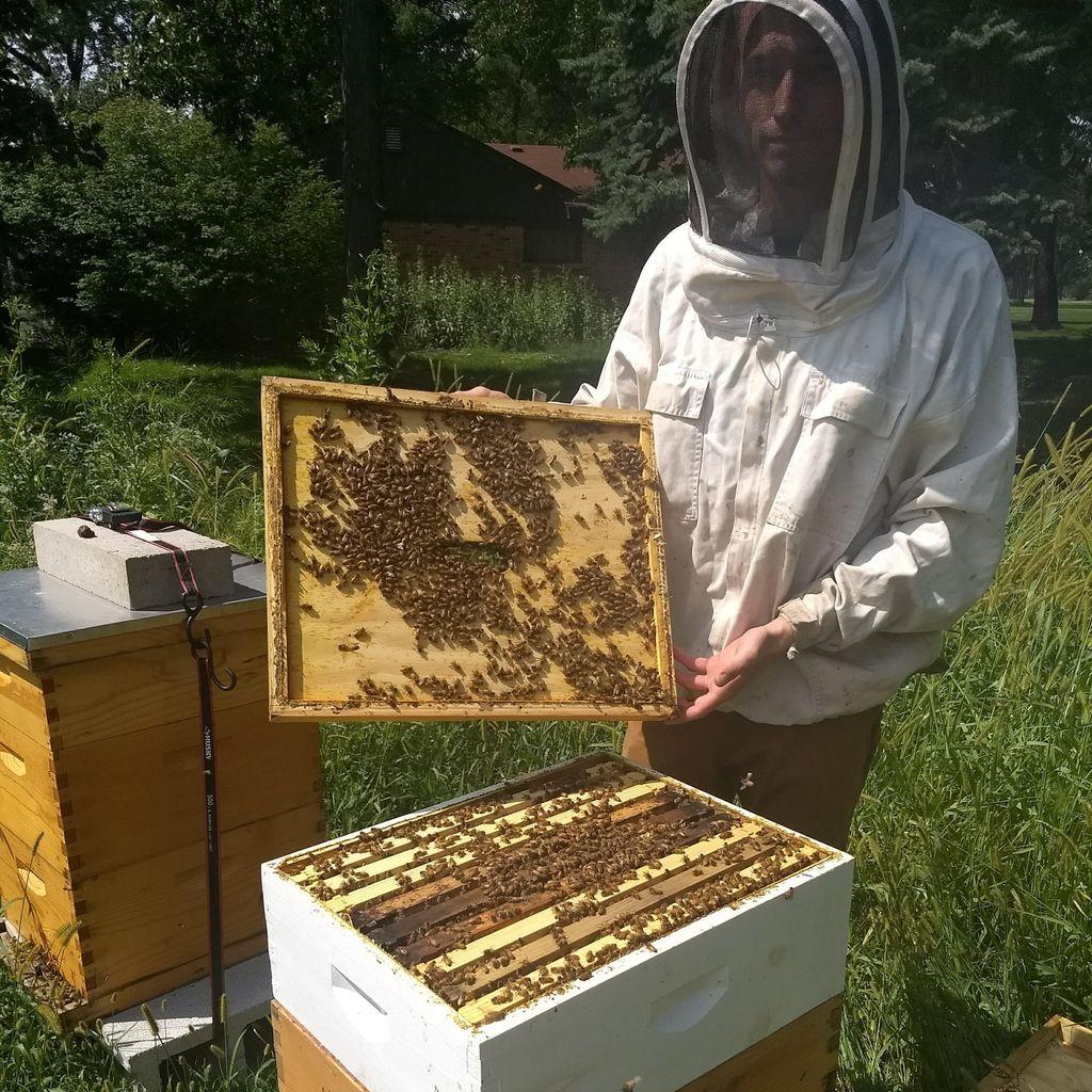 City Bee Savers