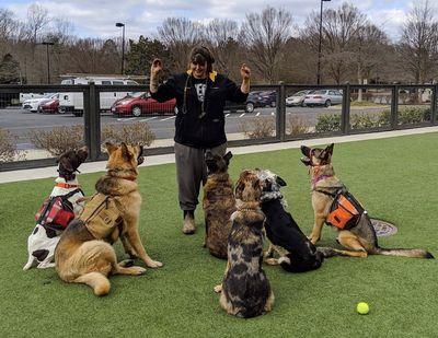 Avatar for TNT Dog Training LLC