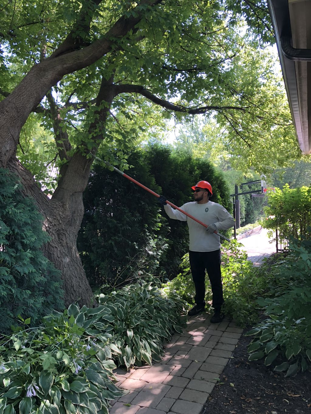 Doing tree trimming