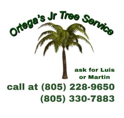 Avatar for Ortega's Jr Tree Service