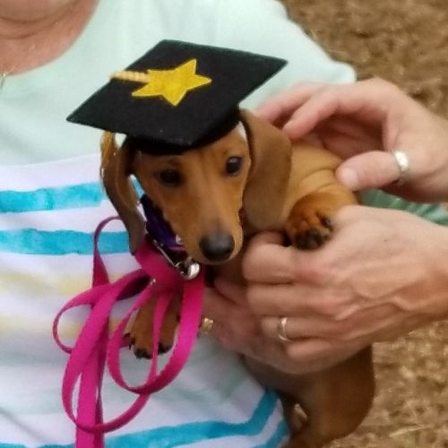 Toolie graduating 3/2019