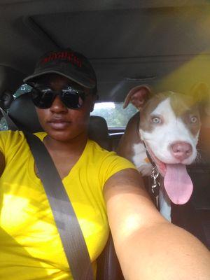 Avatar for Pitbull Dreams Norcross, GA Thumbtack
