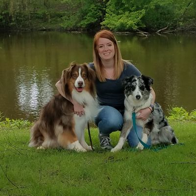 Avatar for All Paws In Dog Training Butler, WI Thumbtack