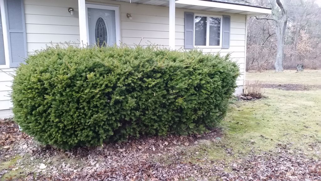 Landscaping Face lift