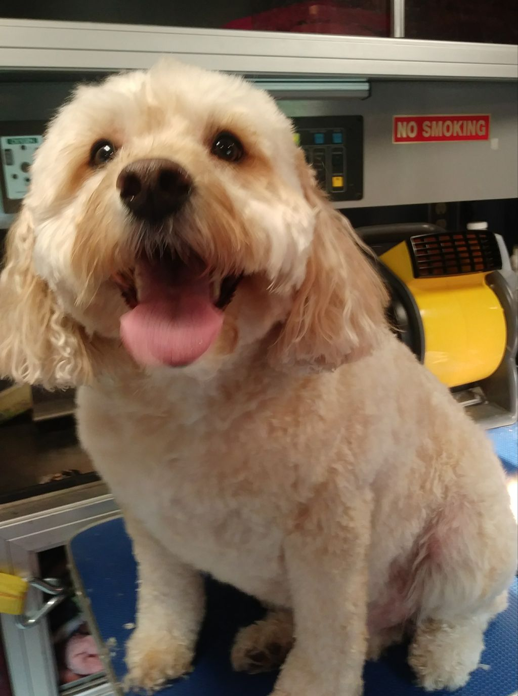 Paws For Effect Grooming Llc Beloit Wi