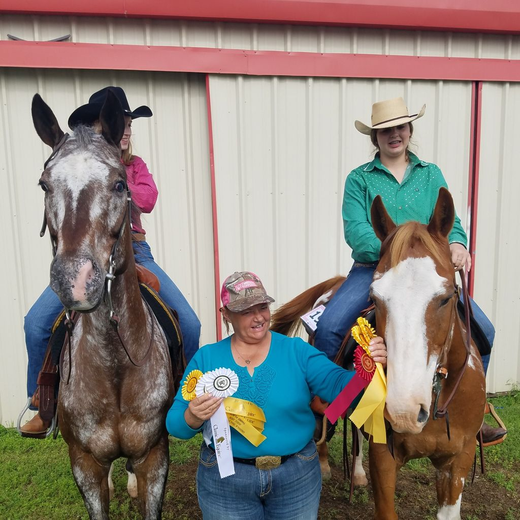 Solomon Show Horses