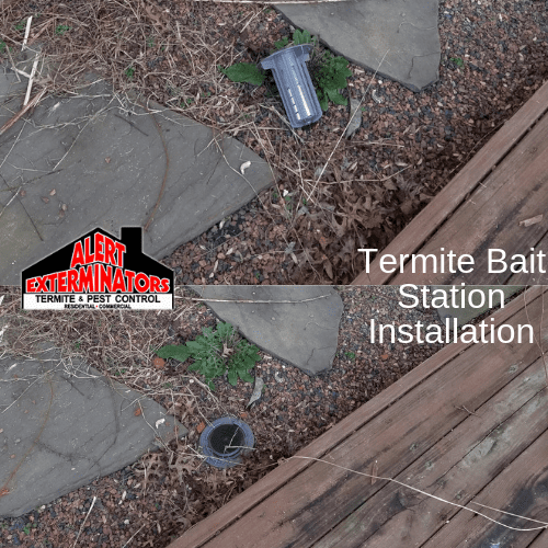 Termite Bait Station Installation - Before and After