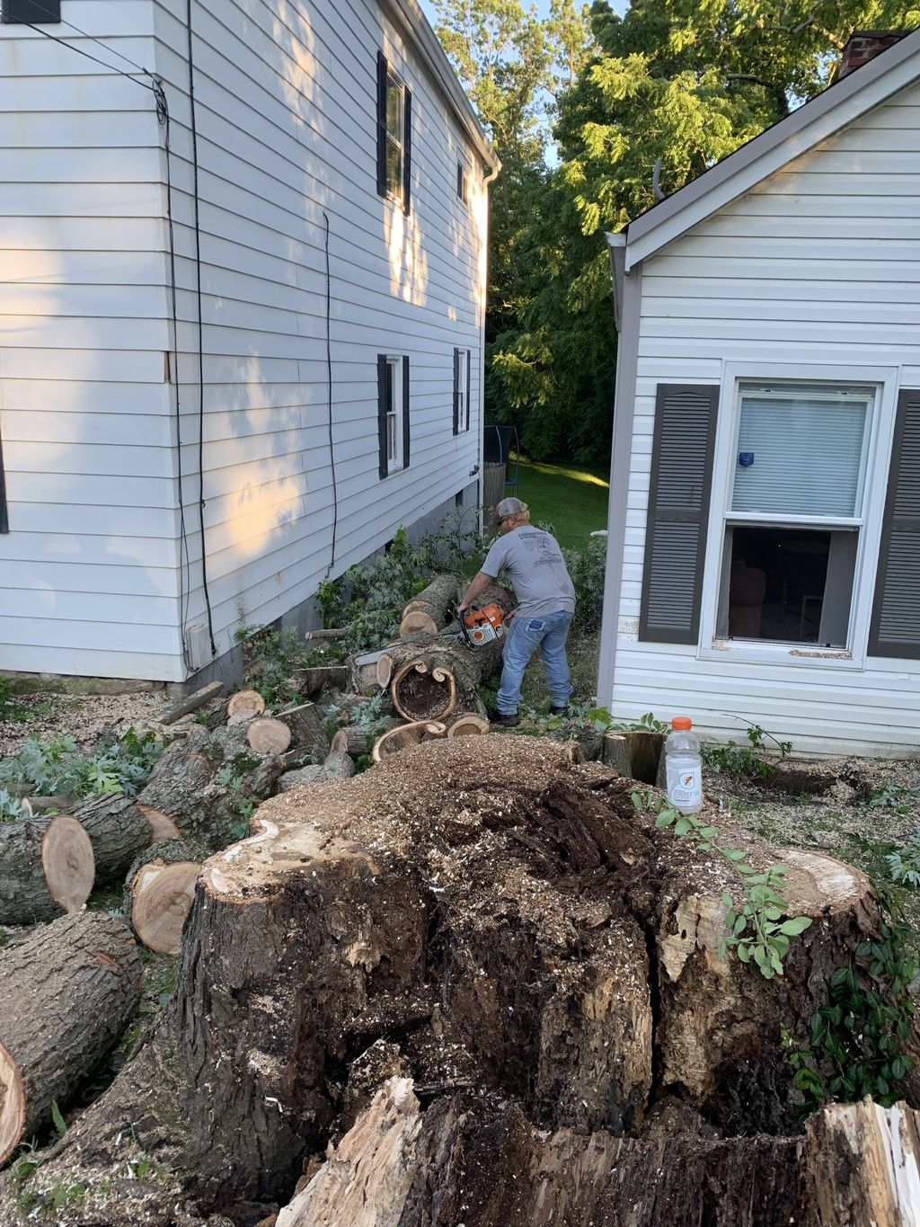 Tree Removal that broke onto two houses