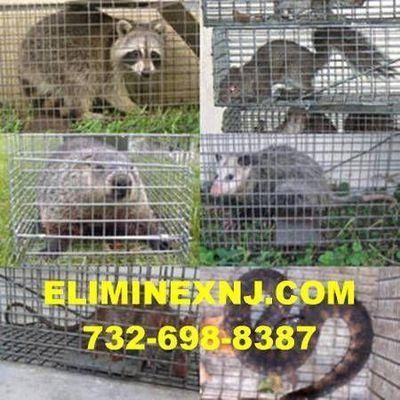Avatar for Eliminex Pest and Wildlife East Brunswick, NJ Thumbtack