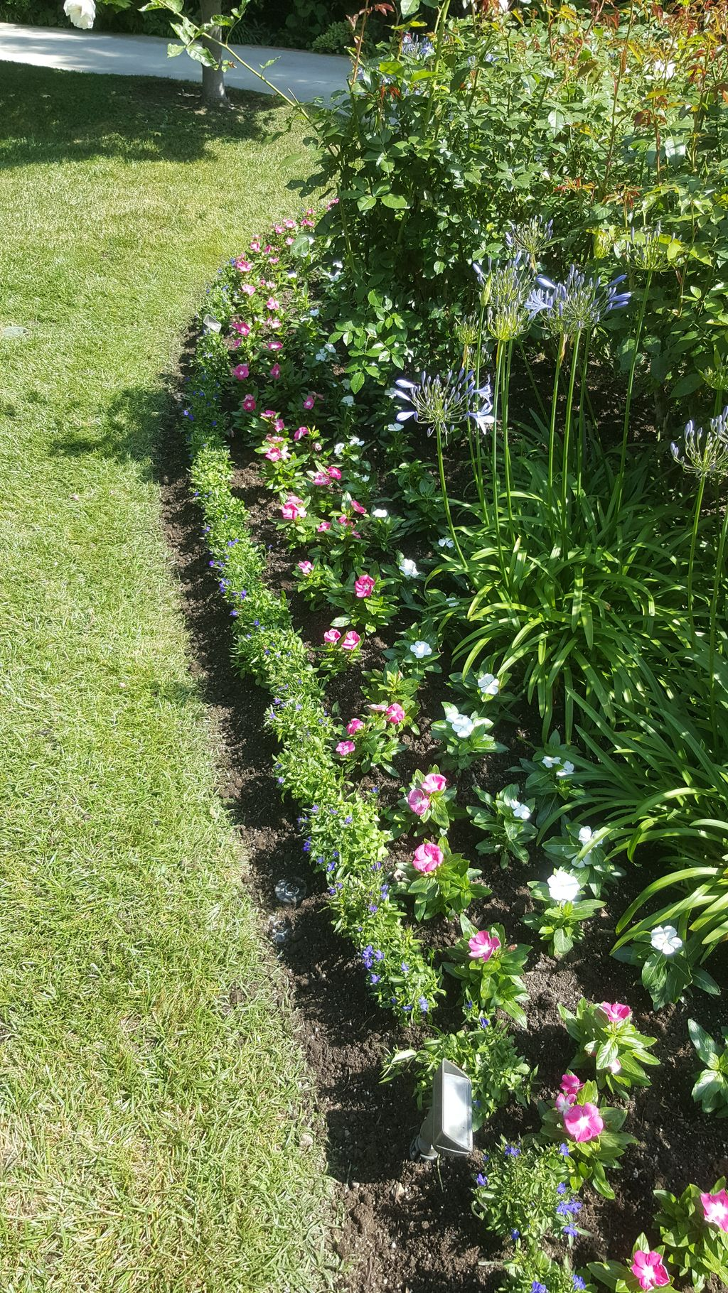 New annuals to planter areas