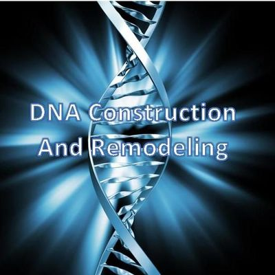Avatar for DNA Construction And Remodeling