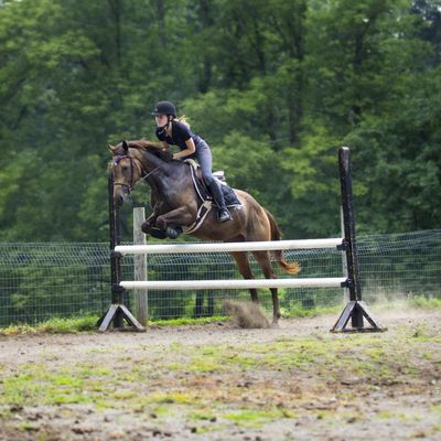 Avatar for Mountain View Equestrian Lebanon, NJ Thumbtack