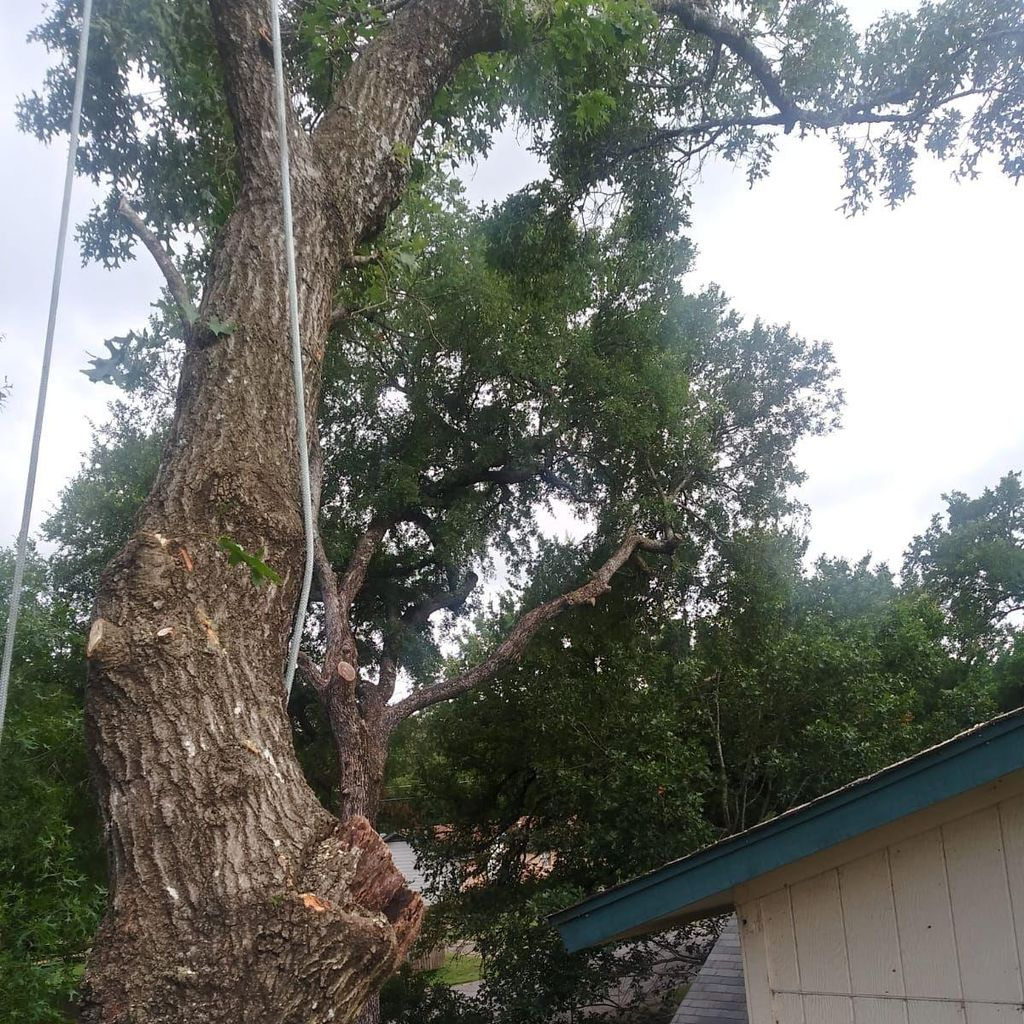 Relampago Tree Services