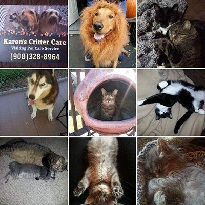 Avatar for Karen's Critter Care - Pet Sitting & Dog Walking