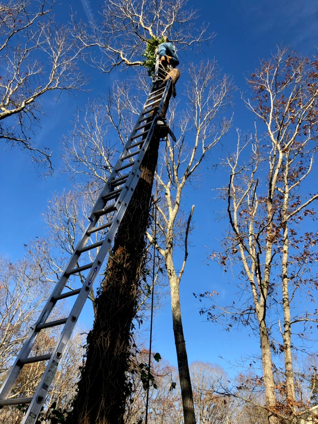 LW Tree Service and Landscape