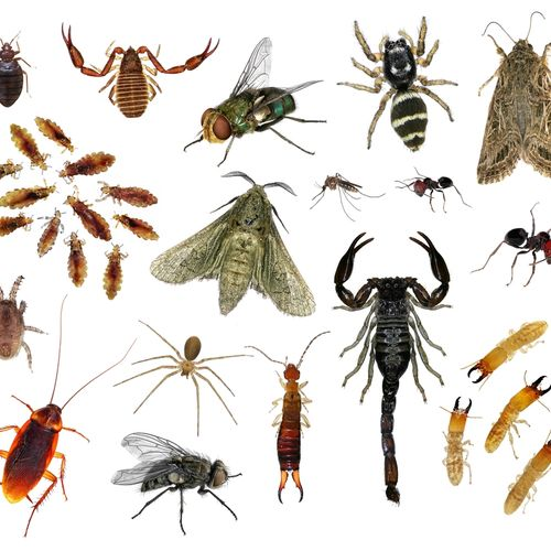 Regular treatments keep the bugs out of your home and business