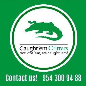 Avatar for Caught'Em Critters