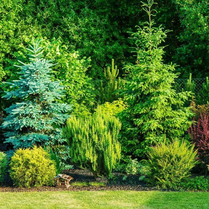 Greenscape Lawn care