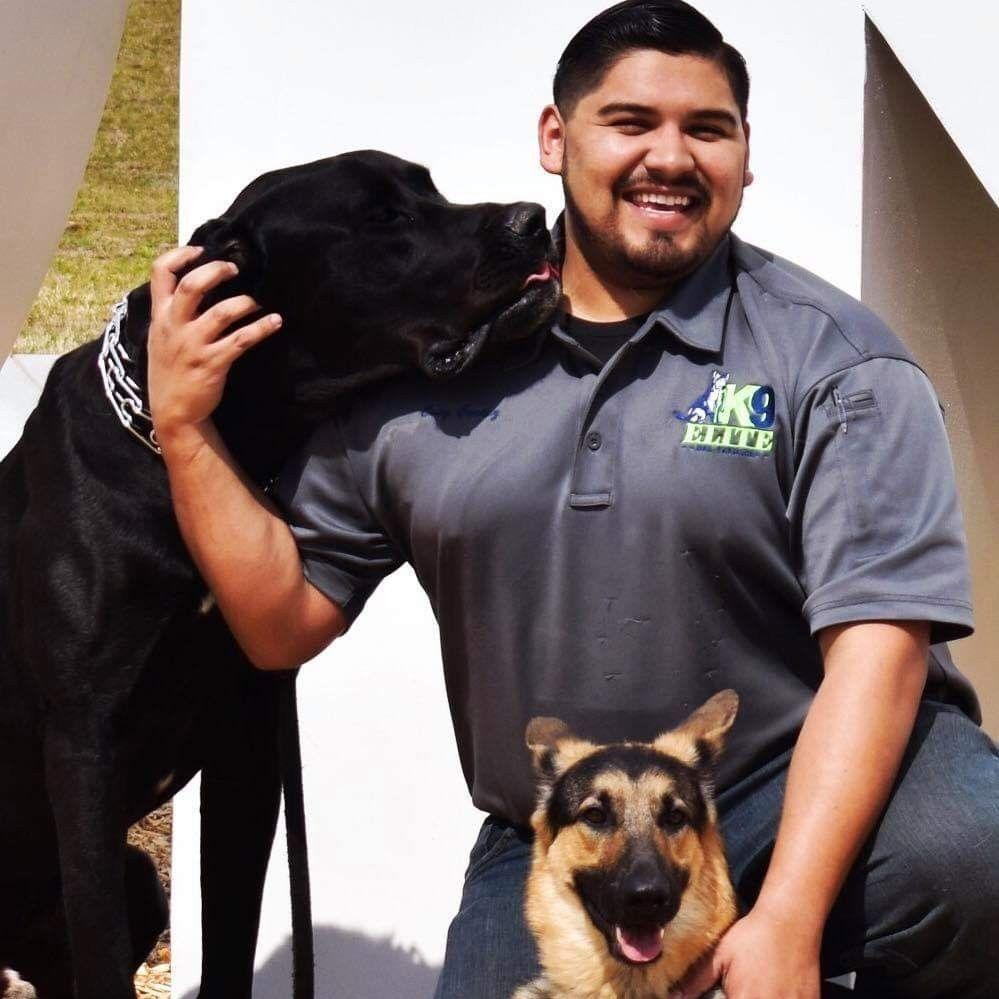 K9Elite Dog Training