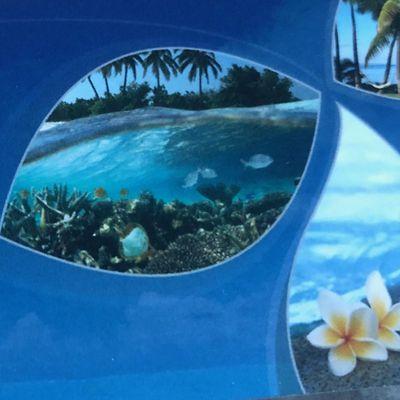 Avatar for Wet N Wild Aquatics Pool Service Phoenix, AZ Thumbtack