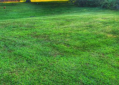Avatar for Sikorski's Lawn Care Bordentown, NJ Thumbtack