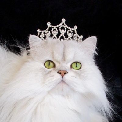 Avatar for The Main Lion Cat Grooming Salon Paoli, PA Thumbtack