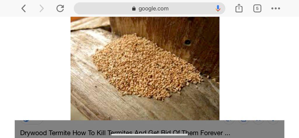 Jacks Termite Solutions