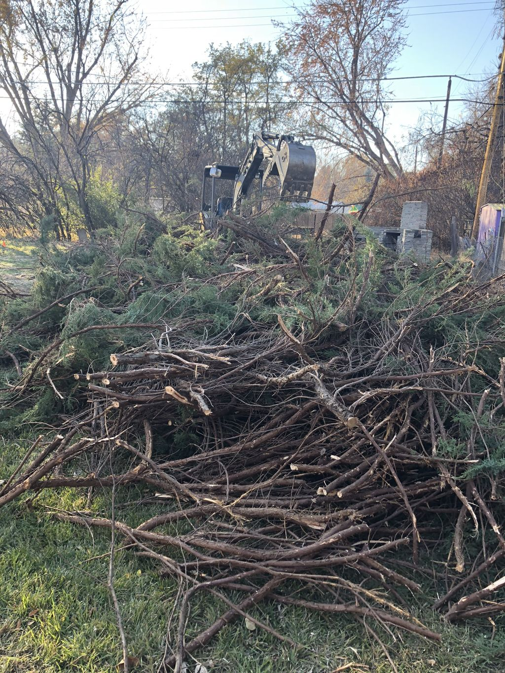 Shrub Cleanup and Haul