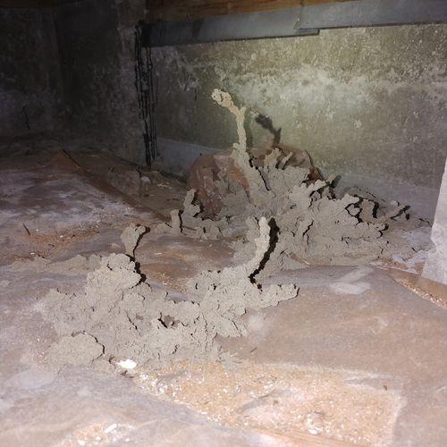 Subterranean termite infestation