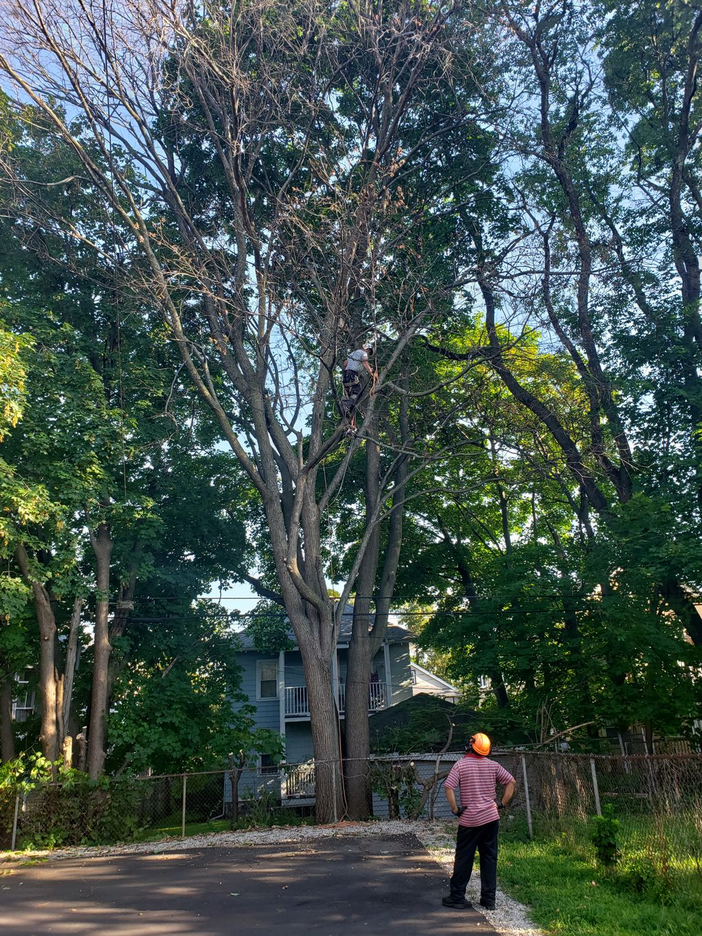 Tree Trimming and Removal - Dorchester Center 2019