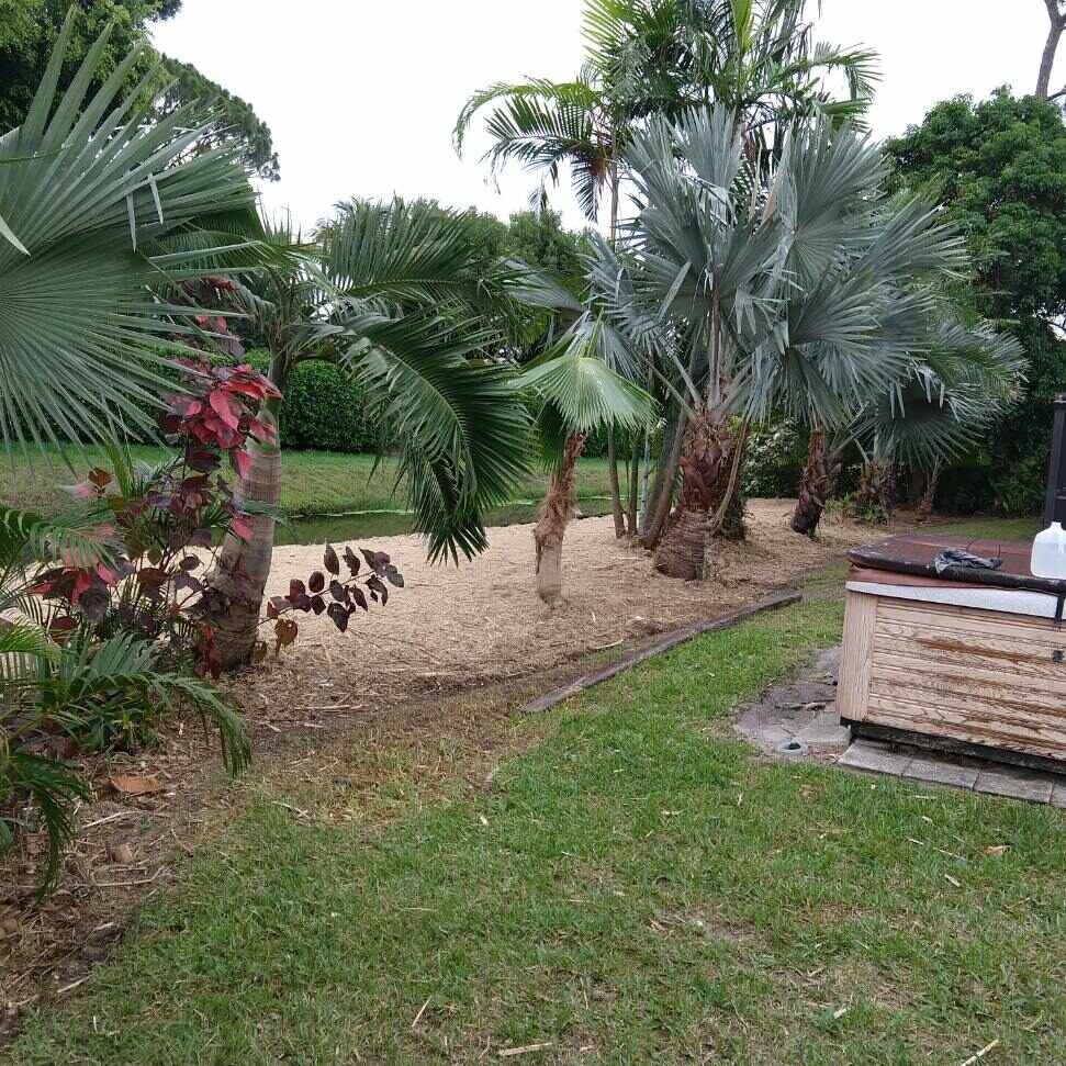 Bamboo Removal, Mulch Clippings