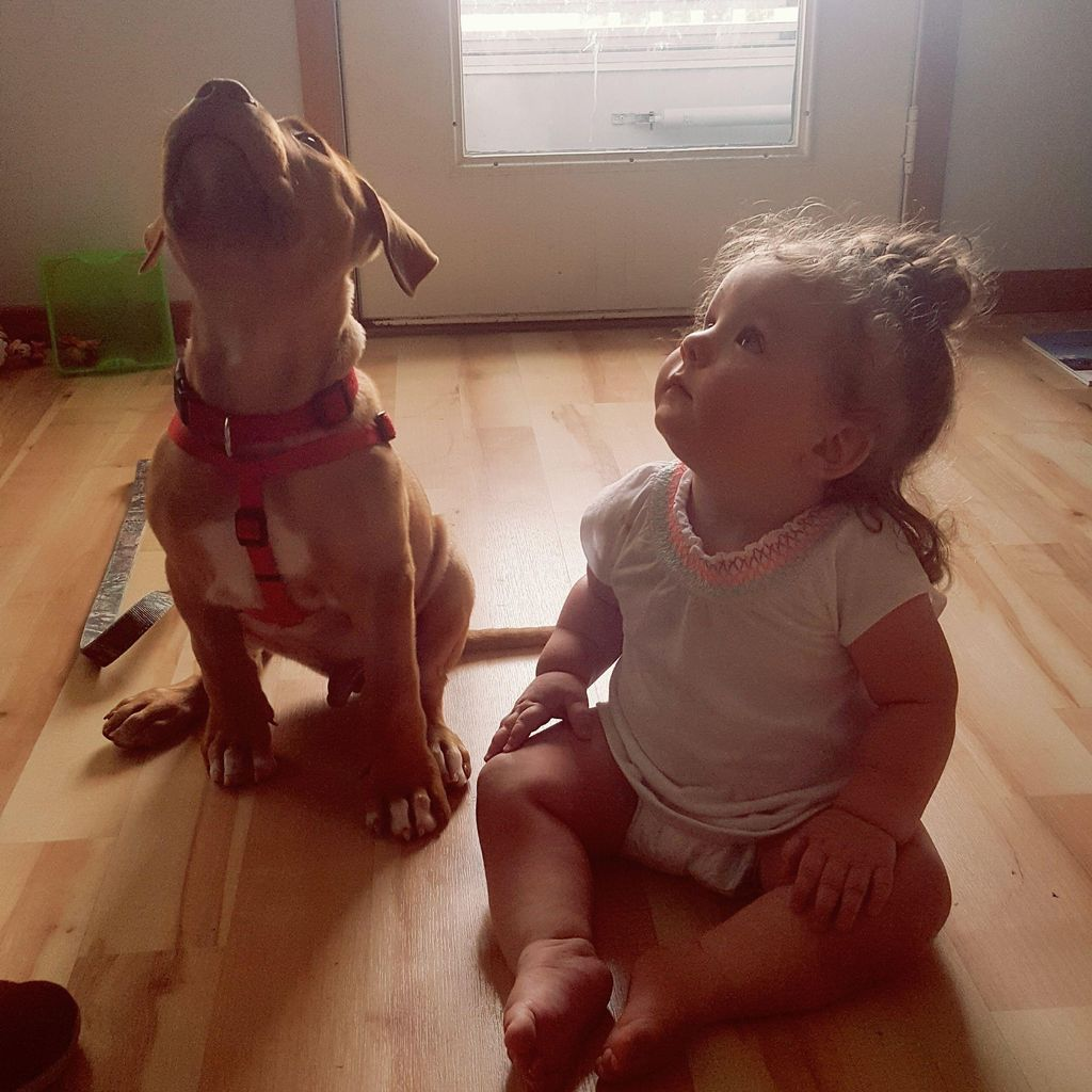 A Howling Good Time  Dog Training