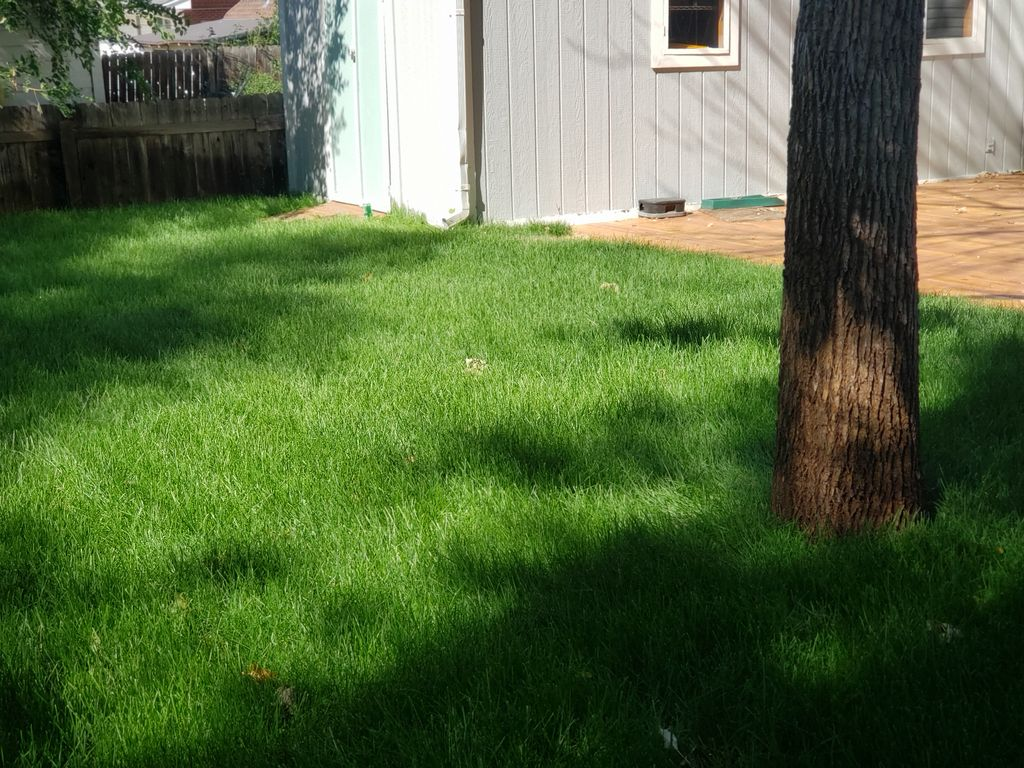 Sprinkler system install, grading Services, and sod installation
