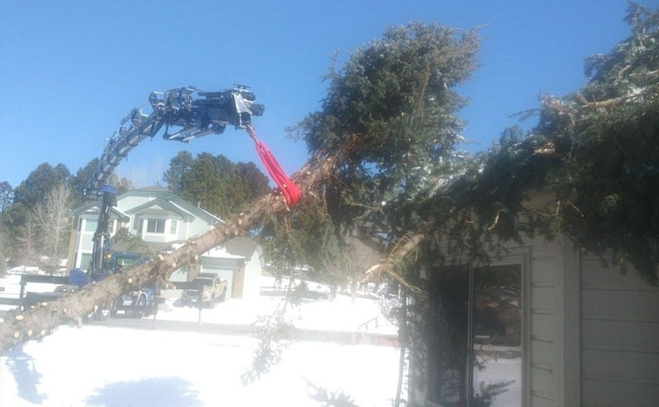 Bomb Cyclone Cleanup