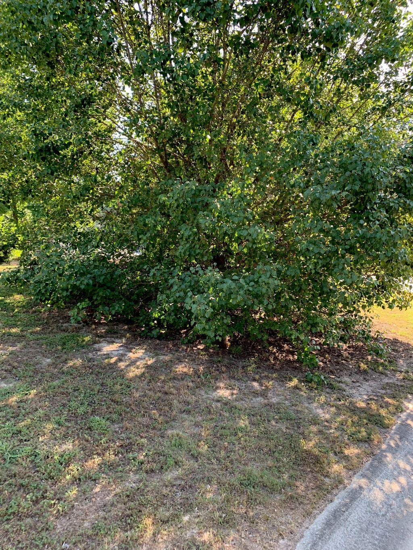 Tree Pruning & Hauling