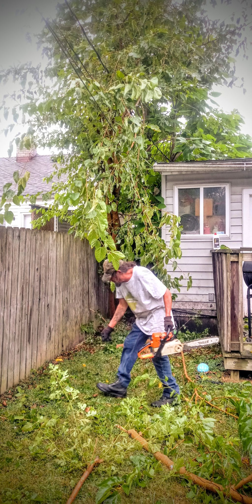 Cluster Tree & Bush Removal