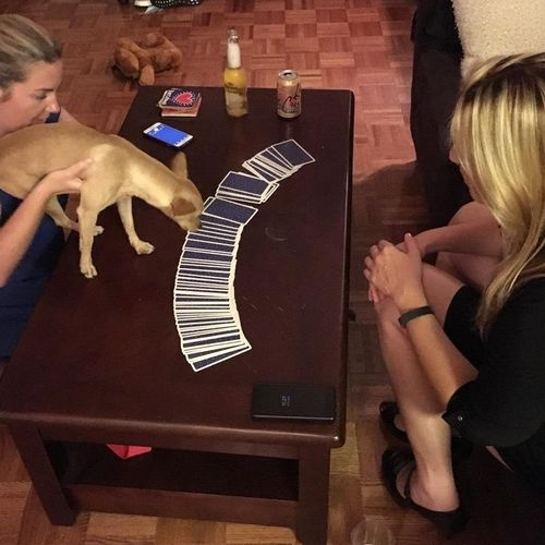 Pet Tarot!