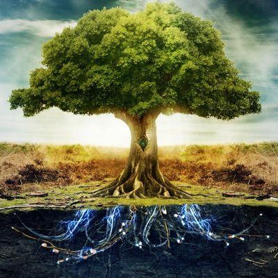 Avatar for landscaping services. Shelton, WA Thumbtack
