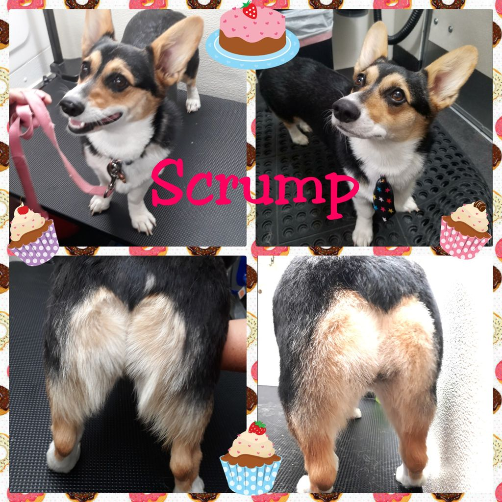 Scrump's first professional groom was mobile