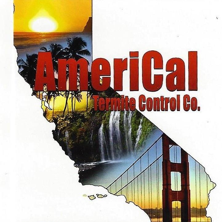 Americal Termite