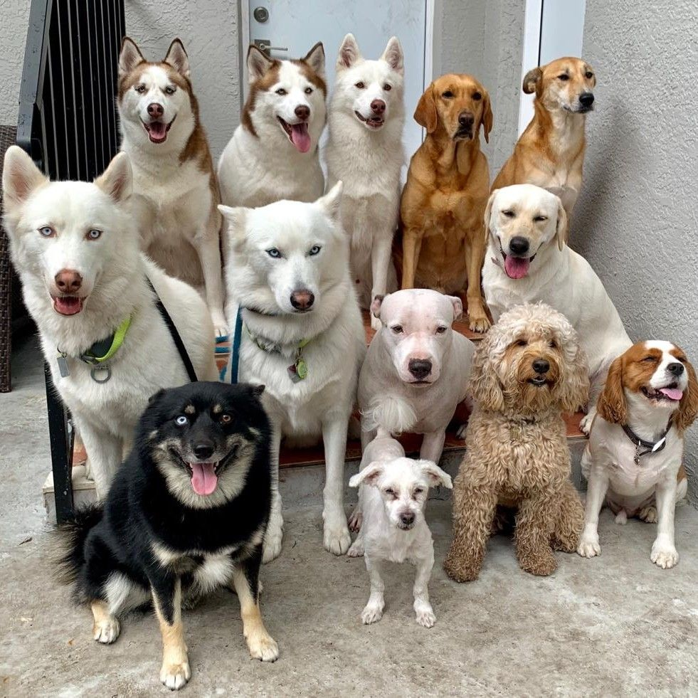 Woof Pack Miami