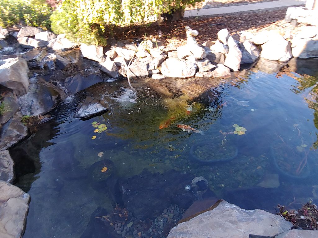 Annual Pond Cleaning