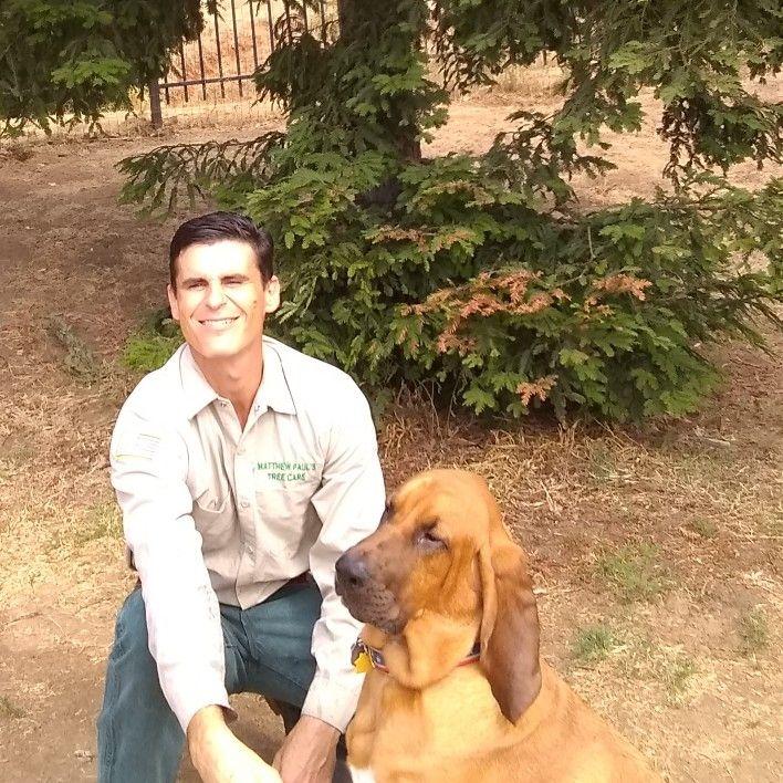 Matthew Paul's Tree Care