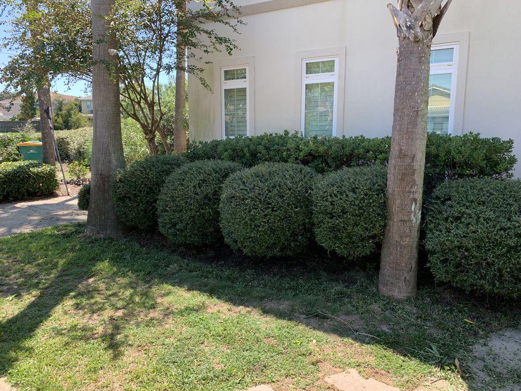 Tree & Hedge Trimming - Destin 2019