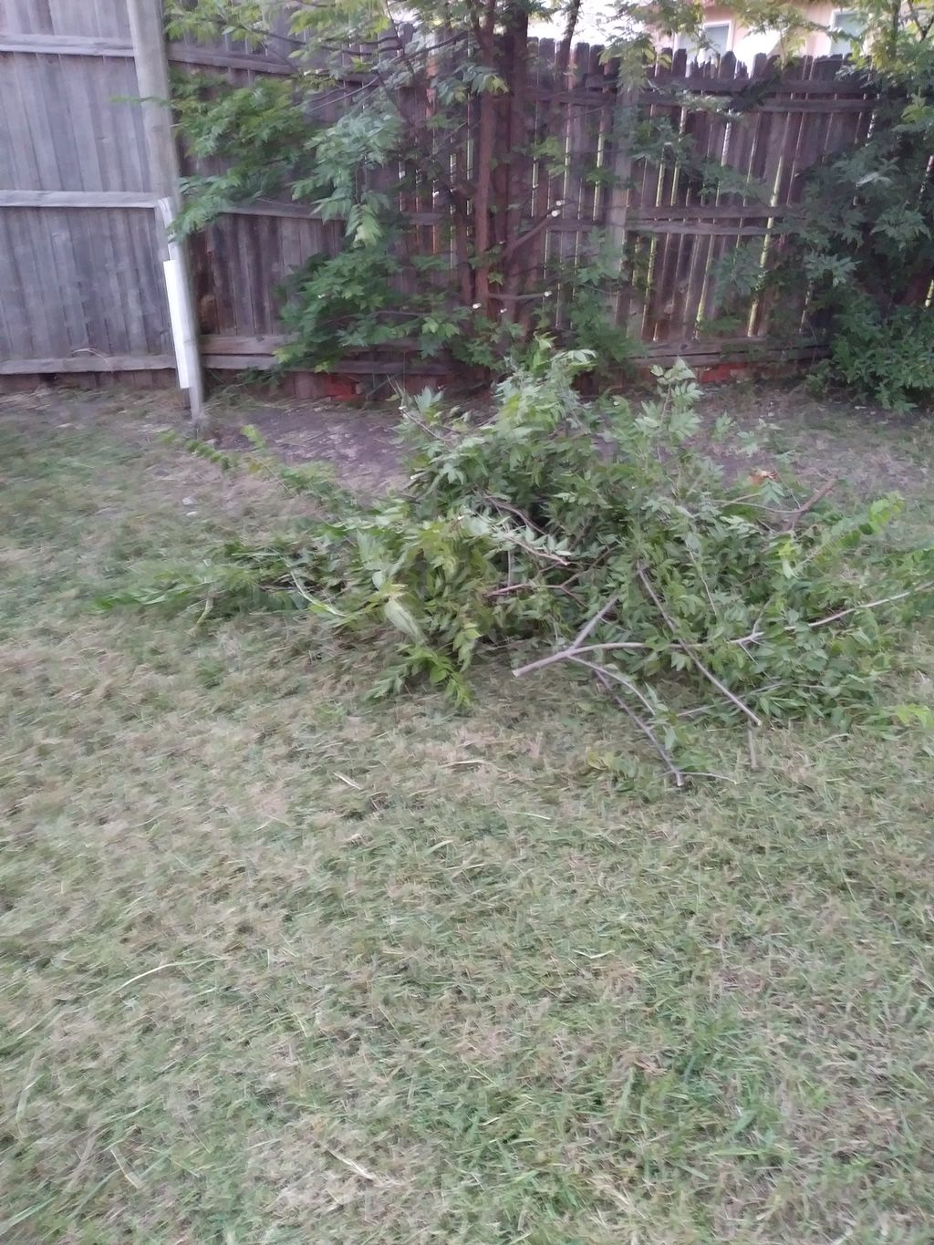 Lawn Mowing and Trimming - The Colony 2019
