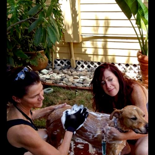 Giving a rescue dog a bath