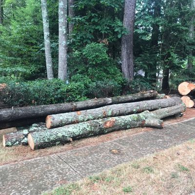 Avatar for Legacy Tree Removal and Landscape Dawsonville, GA Thumbtack