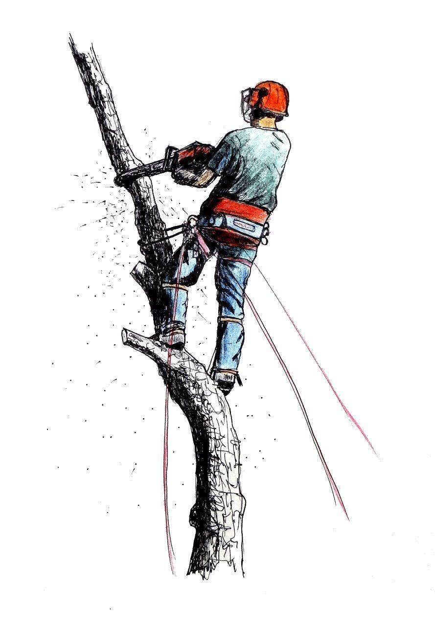 Warne's Tree Service LLC